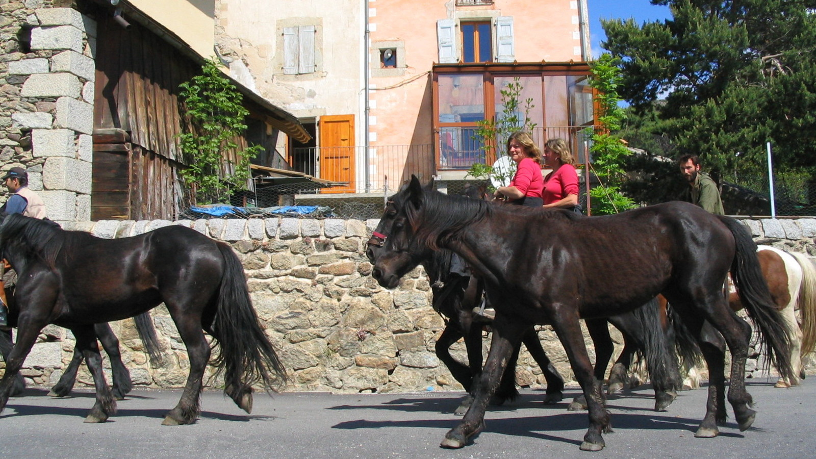 Horse breeding at Dorres